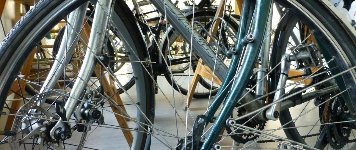 In the bike shed. Image © Fran Allen.